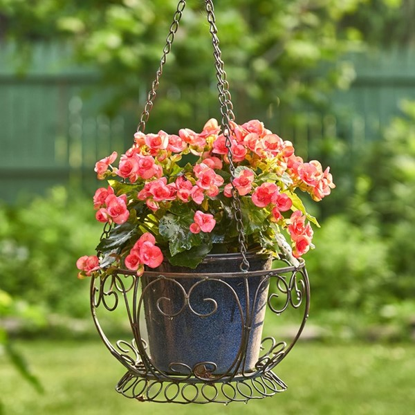 Iron Hanging Basket Planter in Bronze